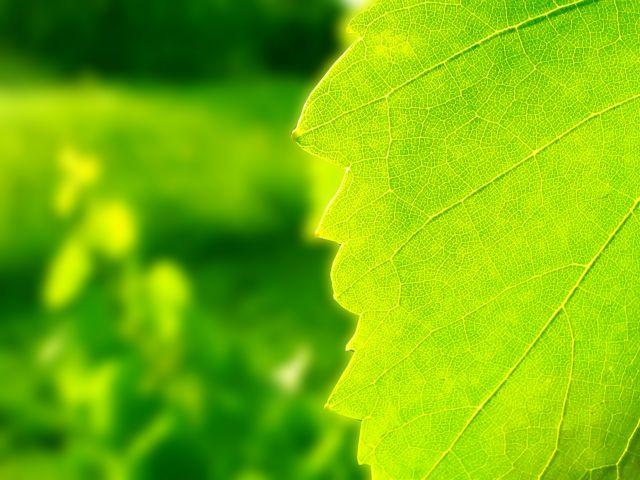 Τεχνητά φύλλα φέρνουν το φως   tovima.gr