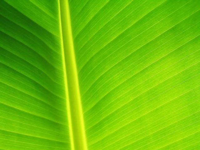 Τα φυτά «ξέρουν» κβαντομηχανική! | tovima.gr