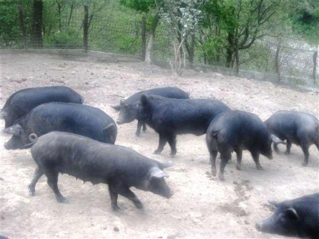 Κοινό μέτωπο Δήμων για την αντιμετώπιση αγριογούρουνων στο Σέιχ Σου   tovima.gr