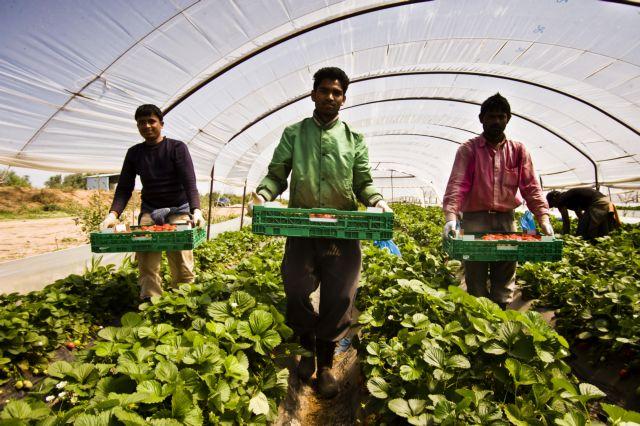 Ευρωβουλή:«Δίχτυ προστασίας» για τους εργάτες της φράουλας | tovima.gr