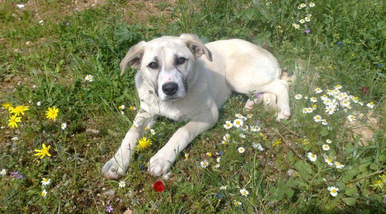 Ζώα που θεραπεύουν! | tovima.gr