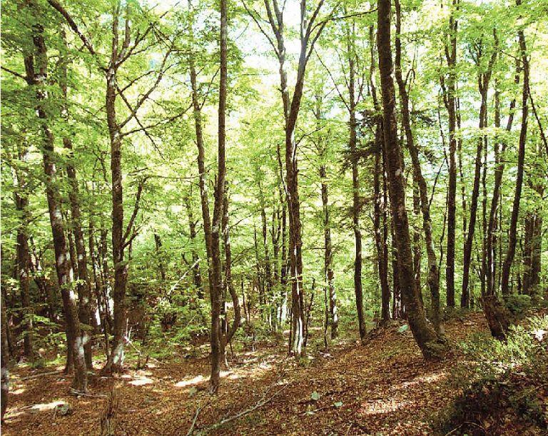 Τα μυστικά του δάσους | tovima.gr