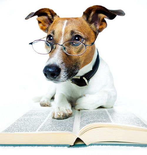 Θέλεις να μάθεις πόσο έξυπνος είναι ο σκύλος σου; | tovima.gr