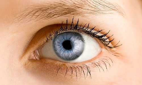 Αποκρυπτογραφήθηκε ο μηχανισμός της όρασης | tovima.gr
