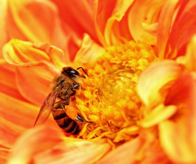 Μέλισσες-«λαγωνικά» ανιχνεύουν ναρκωτικές ουσίες | tovima.gr