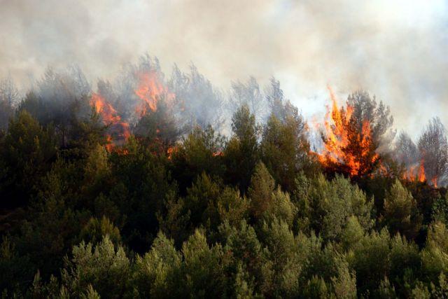 Διπλάσιος αριθμός καμμένων εκτάσεων εφέτος | tovima.gr