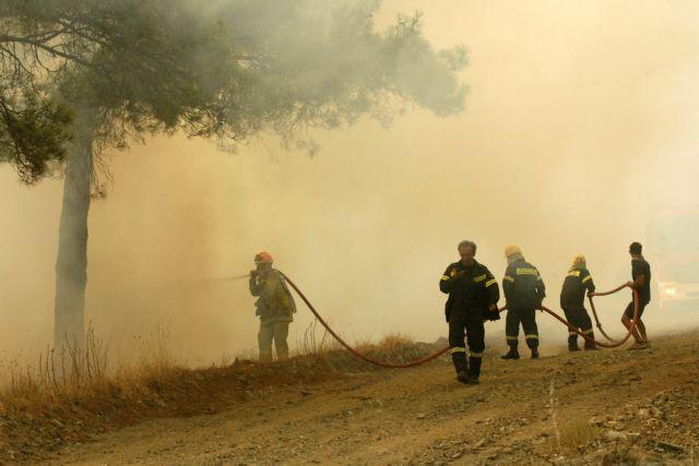 Σε ύφεση η καταστροφική πυρκαγιά στον Έβρο | tovima.gr