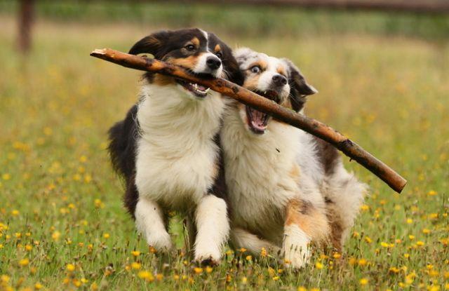 Oι σκύλοι συναισθάνονται αμέσως τους άλλους σκύλους | tovima.gr
