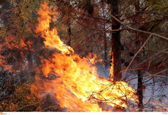 Αλεξανδρούπολη: Συνεχίζεται η μάχη με τις φλόγες στη Λευκίμμη | tovima.gr
