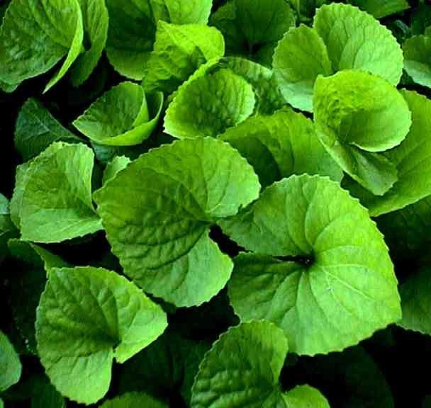 Τα φυτά απορροφούν περισσότερο CO2 από ό,τι νομίζαμε   tovima.gr
