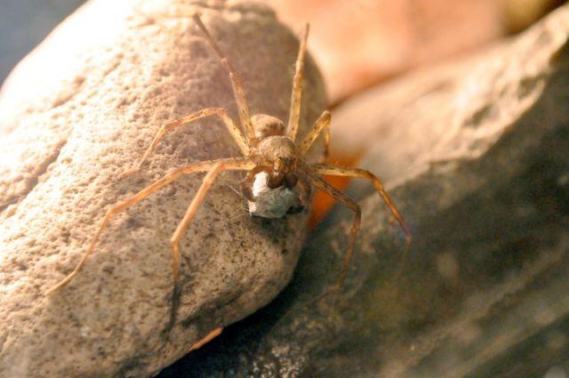 Για τις θηλυκές αράχνες, το περιτύλιγμα του δώρου μετράει | tovima.gr