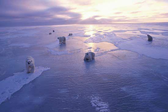 Καλοκαίρι χωρίς θαλάσσιους πάγους στην Αρκτική το 2015   tovima.gr