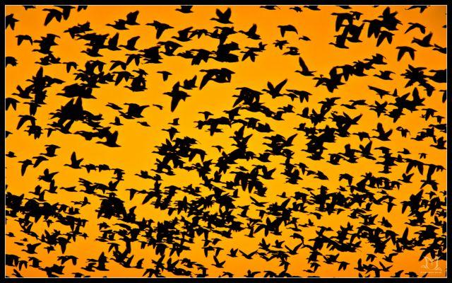 Απροστάτευτα τα μεταναστευτικά πτηνά   tovima.gr