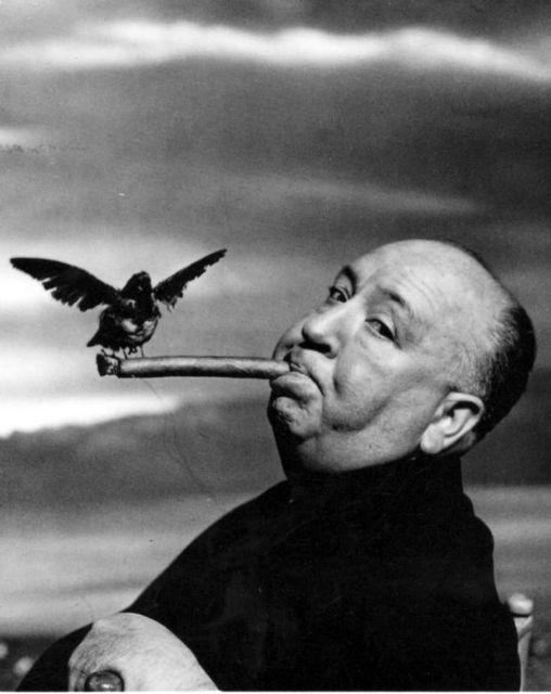 Λύθηκε το μυστήριο των «Πουλιών» του Χίτσκοκ | tovima.gr