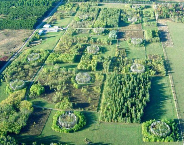 Τεχνητά δέντρα θα «καθαρίζουν» την ατμόσφαιρα   tovima.gr