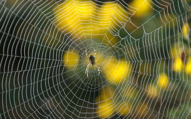 Αριστουργηματική «αρχιτέκτων» η αράχνη | tovima.gr