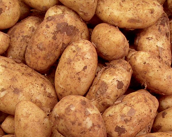 Μια πατάτα για όλες τις δουλειές; | tovima.gr