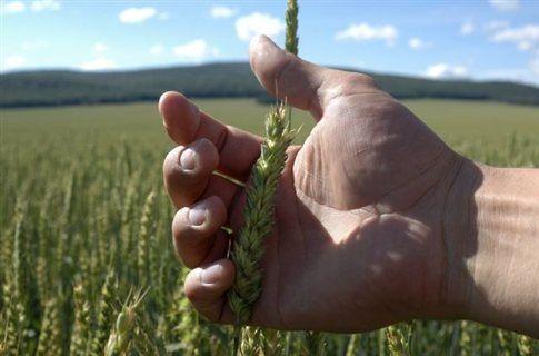 Λιγότερο παραγωγικές οι βιολογικές φάρμες | tovima.gr