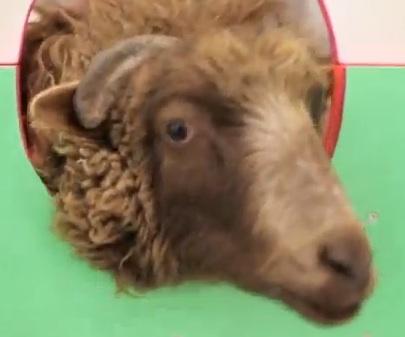 Σώστε το πρόβατο   tovima.gr