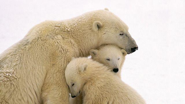 Οι καλύτερες μαμάδες του ζωικού βασιλείου | tovima.gr