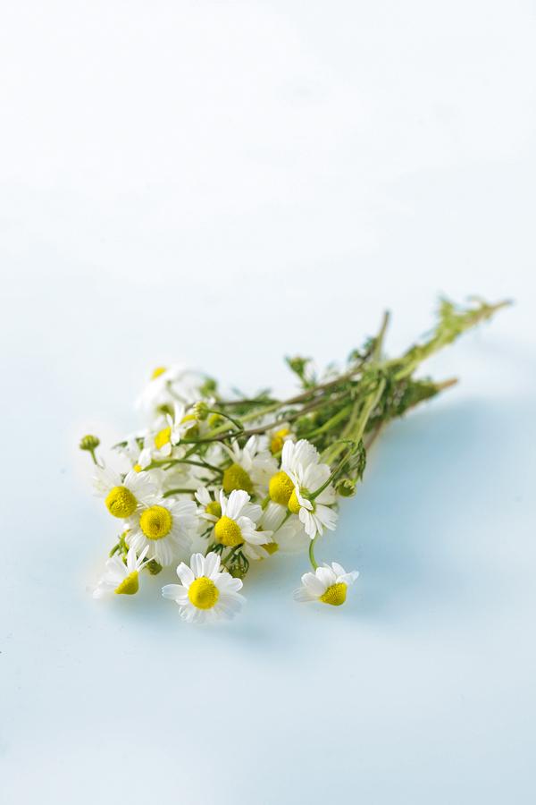 Χαμομήλι: αρωματικό και θεραπευτικό   tovima.gr