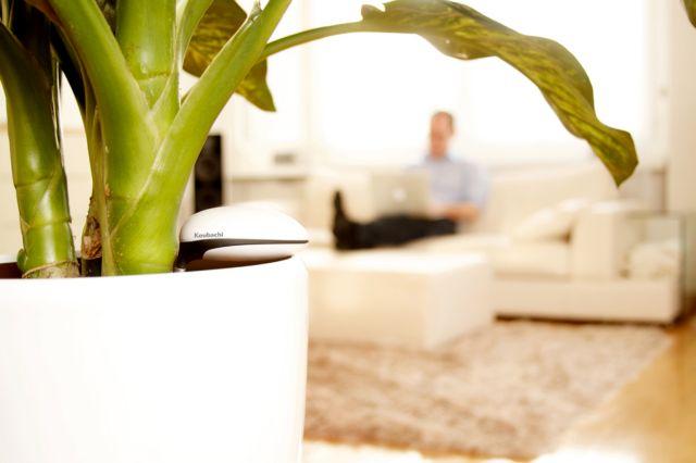 Πότε «διψούν» τα φυτά;   tovima.gr