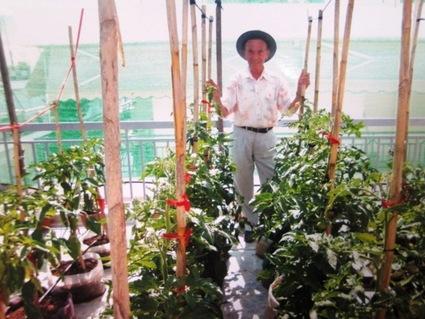 Λαχανόκηπος με όλα τα καλά σε μια ταράτσα 120 τ.μ. | tovima.gr