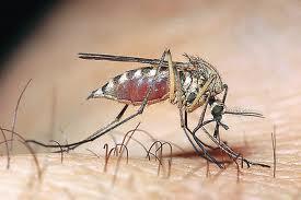 Προγράμματα ελονοσίας | tovima.gr