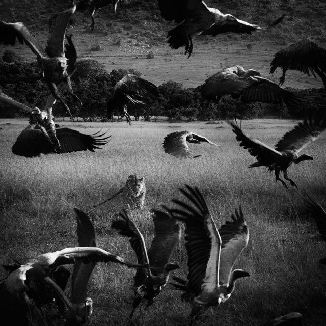 Σημαντική βράβευση του έλληνα φωτογράφου Νικόλα Λώτσου   tovima.gr