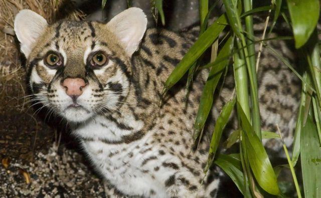 Ερευνα: Δεκάδες είδη ζώων υπό εξαφάνιση στον Αμαζόνιο | tovima.gr