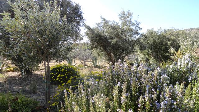 Κήπος κοντά στη θάλασσα | tovima.gr