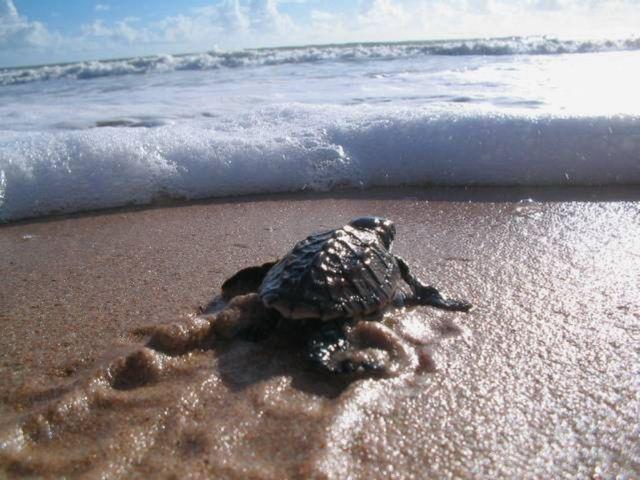 Γεννήθηκε το πρώτο χελωνάκι της σεζόν στη Ζάκυνθο | tovima.gr