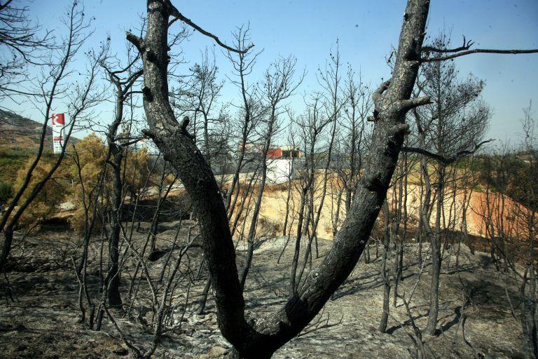 Ξεκινά η καταγραφή ζημιών από τη φωτιά στην Αρκαδία   tovima.gr