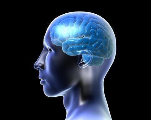 Η «αποχέτευση» του εγκεφάλου   tovima.gr