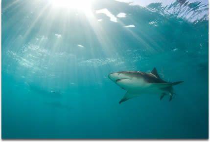 Καρχαρίες εναντίον καρκίνου του δέρματος   tovima.gr