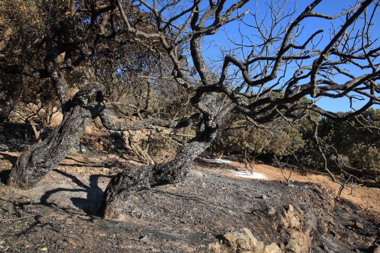 Χίος: 146.000 στρέμματα αφάνισε η καταστροφική πυρκαγιά | tovima.gr