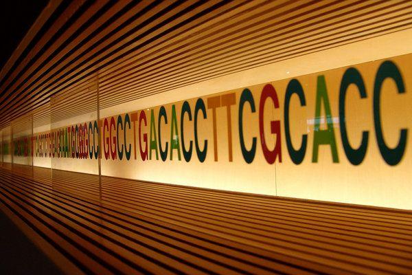 Ενα ολόκληρο βιβλίο σε ένα μόριο DNA   tovima.gr
