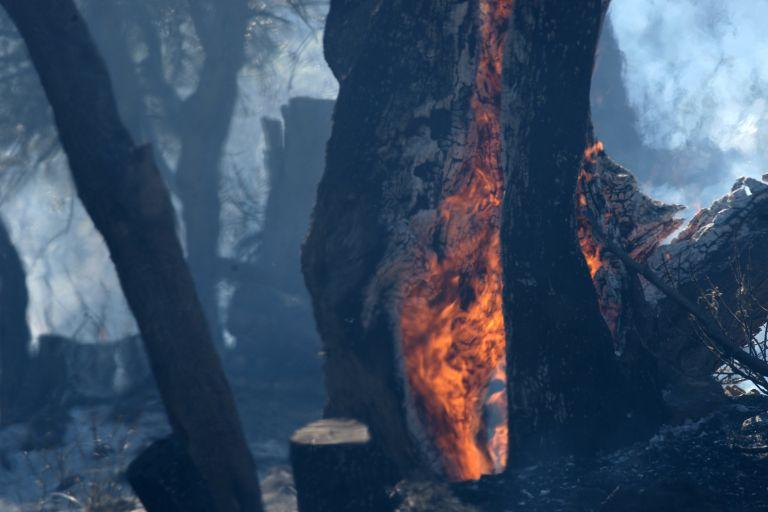 Πυρκαγιά σε εξέλιξη στα βόρεια της Πάτρας | tovima.gr
