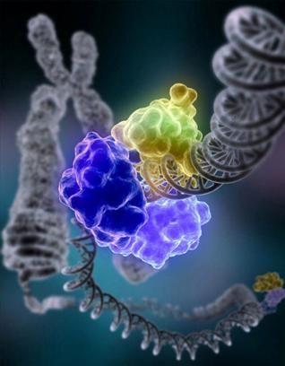 Ολοκληρώθηκε η «Εγκυκλοπαίδεια των στοιχείων του DNA»   tovima.gr