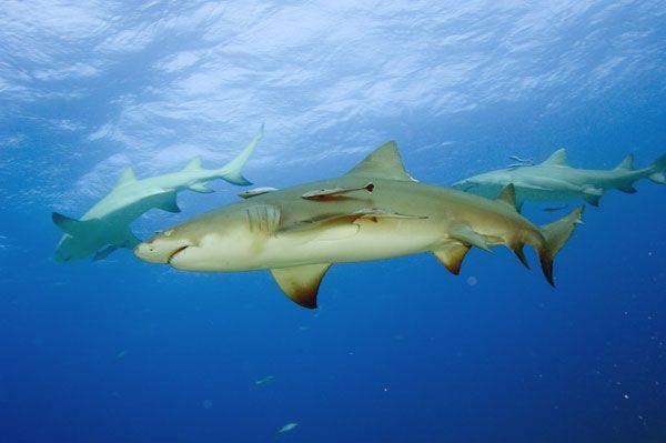 Οι «λεμονοκαρχαρίες» εκπαιδεύονται κοινωνικά | tovima.gr