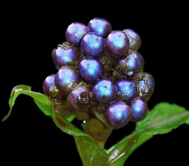 Το φρούτο που δεν… ξεθωριάζει | tovima.gr