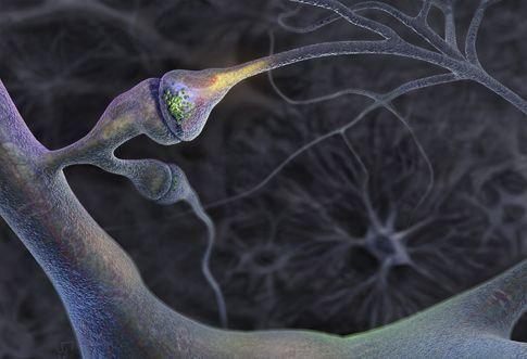 Υπολογιστικό μοντέλο αποκαλύπτει τη δημιουργία εγκεφαλικών συνάψεων | tovima.gr