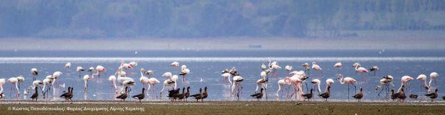 Κυνηγούσαν παράνομα πάπιες στο Εθνικό Πάρκο Κερκίνης   tovima.gr