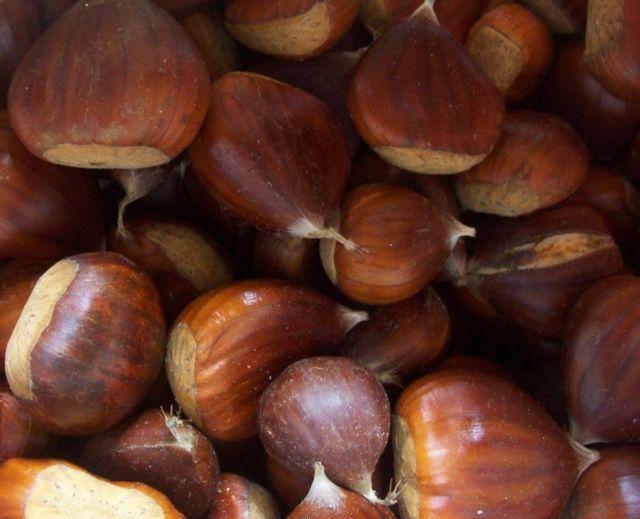 Το χανιώτικο κάστανο στον… δρόμο για προϊόν ΠΟΠ | tovima.gr