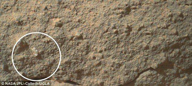 Τι φυτρώνει στον Αρη; | tovima.gr
