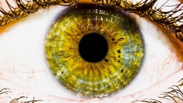 Αποκατάσταση της όρασης σε πλήρως τυφλά ποντίκια | tovima.gr