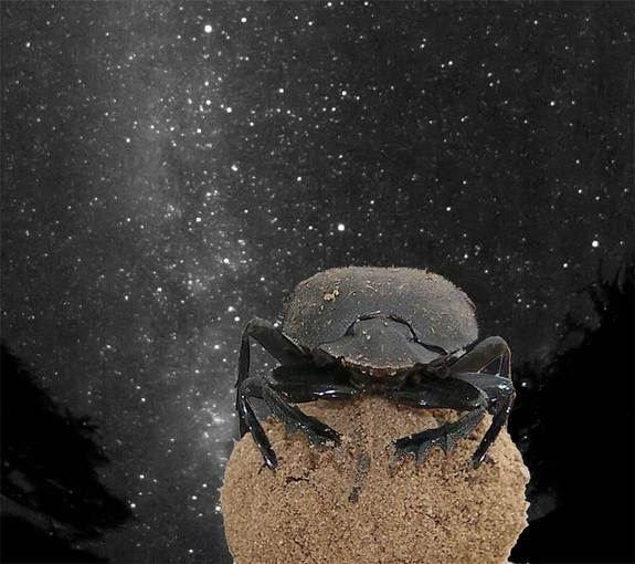 Ένα σκαθάρι μετράει τ' άστρα! | tovima.gr