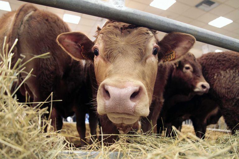Κρέας… «Άρωμα» πλούσιο σε Ω-3 λιπαρά οξέα | tovima.gr