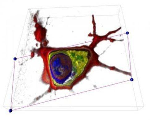 Ολογραφικό μικροσκόπιο παρακολουθεί ζωντανά δείγματα σε 3D | tovima.gr