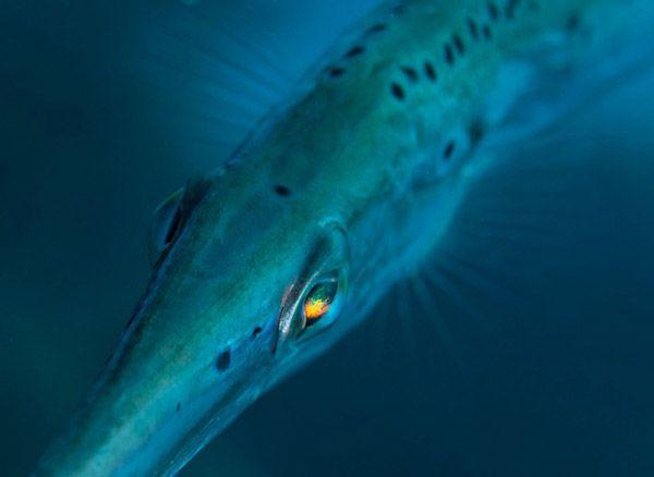 Το ψάρι με τα μάτια «ουράνιο τόξο» | tovima.gr
